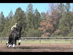 6-minute video of horses, why we like them, why we need them...