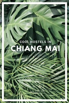 Cool Hostels in Chiang Mai