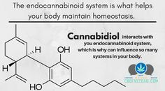 CBD is so effective because it interacts with our body's regulator. Find out more about how CBD can help you right here at CBDinstead.com! #CBDoil #CBDfacts #CBDinstead