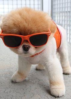 Boo Cool!