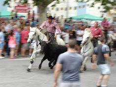 #camargue #bulls En savoir plus sur l'univers camargue : http://www.chevalcamargue.fr/
