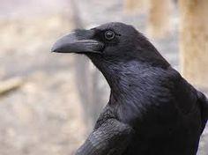 raven - Поиск в Google