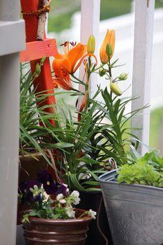 Colors scheme for spring. Bright and sunny. My deck arrangement. Garden Photos, Color Schemes, Deck, Bright, Spring, Colors, Flowers, Plants, R Color Palette