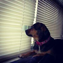 "Sookie using her ""spy"" hole to watch the neighborhood!"