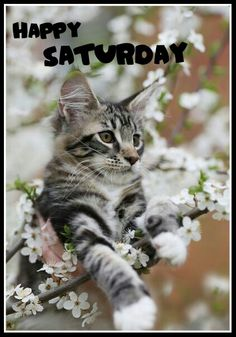 1000 images about catson saturdays on pinterest