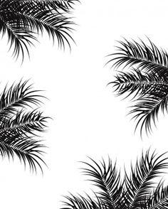 Projeto tropical com folhas e folhas de palmeiras pretas no fundo branco