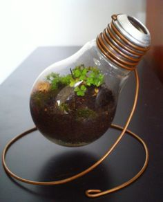Light bulb planter. How to hollow out bulb http://www.teamdroid.com/diy-hollow-out-a-light-bulb/