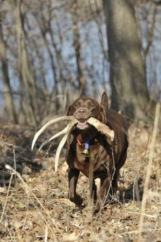 Teach Your Dog To Find Sheds | Field & Stream.  Don't think my dog has the attention span for this, but it'd be neat.