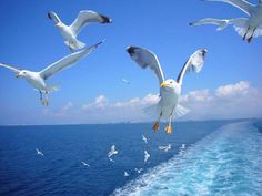 vacanta insula thassos Sea Birds, Love Birds, Gulls, Shorebirds, North Africa, Greek Islands, Counting, Lighthouse, Boats