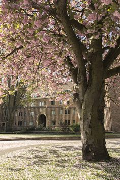 St.John's College Blossom by Scudamore's Punting Cambridge