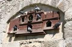 Dove Pigeon, Birdhouses, Bird Cage, Building Materials, Istanbul, Cool Photos, Ottoman, Arch, Castle