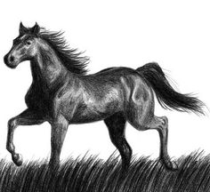 10+ Cool Horse Drawings for Inspiration - Hative