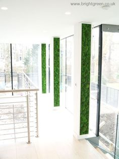 Preserved Bun Moss Panels for a Commercial Premises