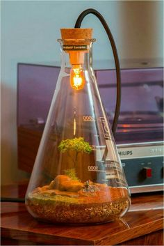 Descubra 85 Fotos, Como Fazer + Tutoriais (Completo) Terrarium using an Erlenmeyer flask and light!Terrarium using an Erlenmeyer flask and light! Indoor Garden, Indoor Plants, Air Plants, Erlenmeyer Flask, Diy Luminaire, Plantas Bonsai, Decoration Plante, Paludarium, Miniature Gardens