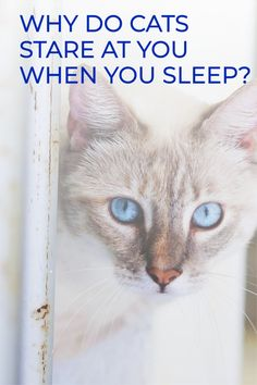 WHY DO CATS STARE AT YOU WHEN YOU SLEEP? 6 REASONSYou may have experienced this scary situation: you are sleeping, suddenly you open your eyes to see in front of you two pair of eyes, looking right back. What about if the room is still dark, and a dark black silhouette is surrounding those eyes? Curiosity Killed The Cat, Welcome To The Group, Cat Stands, When You Sleep, Staring At You, Cat Care Tips, Black Silhouette, Domestic Cat, Love Pet