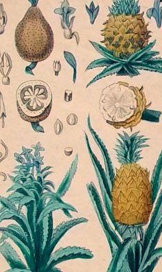 1828.Dos pequeños grabados  de Botánica por CastafioreOldPrints, €12.00