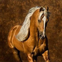The only color of palomino worth even looking at.