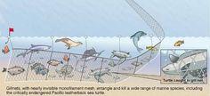 Sea Turtle Restoration Project. Amazing organization worth supporting!