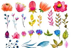 Big watercolor floral collection - Illustrations - 2