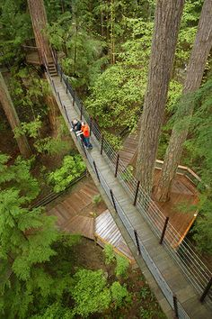 Vancouver Attractions – Treetops | Capilano Suspension Bridge | Capilano Suspension Bridge Park