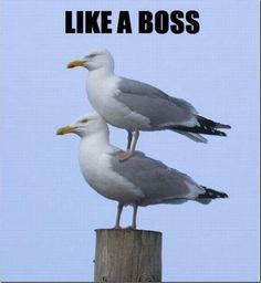 LOL - Like a boss - www.funny-pictures-blog.com