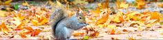 Squirrel in Autumn Leaves by FallOut99 on DeviantArt