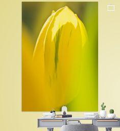 Tulp in tegenlicht 3