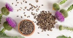 Medicinal Herbs for Fatty Liver. Natural Ways, Milk Thistle, Artichoke – Vita. Medicinal Herbs for Thistle Plant, Thistle Seed, Cancer Fighting Foods, Cancer Cure, Healing Herbs, Medicinal Herbs, Milk Thistle Benefits, Milk Thistle Extract, Healthy Liver