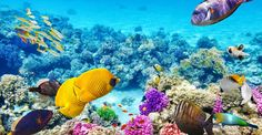 Best Snorkelling Spots in Sydney for Inexperienced Snorkellers and Kids