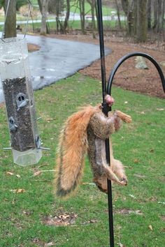 Wow lol dead hung by nuts