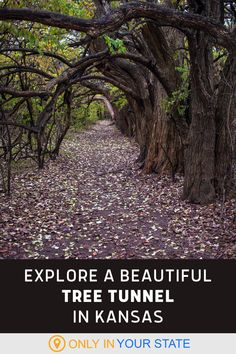Explore a tunnel of trees at this beautiful nature center in Kansas. A great day trip for families, enjoy hiking trails and wildlife when you visit. Rv Travel, Places To Travel, Places To Visit, Tree Tunnel, Hidden Beach, Nature Center, Natural Wonders, Hiking Trails, Vacation Ideas
