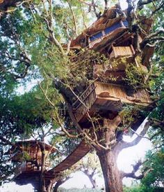 Ya I could be an Ewalk and live in a tree house. Give me a man with a blonde beard, a tree house, and the river... Happy forever