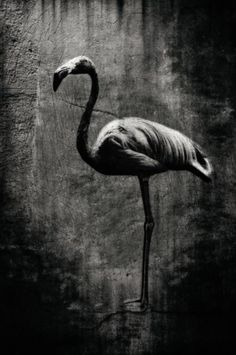 Welcome to the magical world  Title: Flamingo  Material: Canvas Dimension:  120 x 80 cm or smaller  Limited edition of 5, for sale.