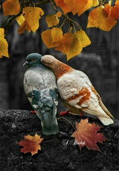 Birds in nature.I Bpqeautiful pictures Pretty Birds, Beautiful Birds, Animals Beautiful, Beautiful Pictures, Nature Animals, Animals And Pets, Cute Animals, All Birds, Love Birds