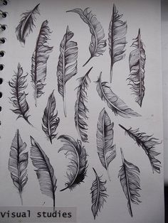 Robyn Parker - Feathers in Biro...