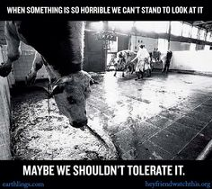 Please don't look away. Come closer. Help the animals