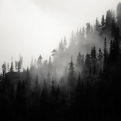 Tatra Mountains by Mac Oller, via Behance Magical Tree, Tatra Mountains, Pine Forest, Dark Forest, What A Wonderful World, Beautiful Space, Landscape Photos, The Great Outdoors, Wonders Of The World