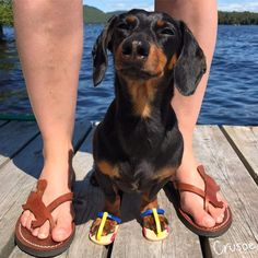 Weiner sandals - Tap the pin for the most adorable pawtastic fur baby apparel! You'll love the dog clothes and cat clothes! <3