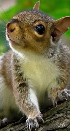 I love squirrels!!