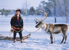 """This is very close to what Kai, his sled and his reindeer would look like! Kaiser Writes ~ A Sami sled driver of Lapland poses with a reindeer from his team. Lapland Finland, Scandinavian Countries, Lappland, Turu, Sled, Mongolia, People Around The World, Norway, Husky"