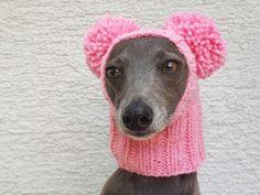 Dog sweater,dog clothes, dog clothes with hat,sweater set with pom poms,clothing for dog. Cute Bunny Pet Costume With Pom Pom Dog Hat Italian Greyhound, Pom Dog, Dog Snood, Pet Costumes, Dog Sweaters, Pom Pom Hat, Christmas Dog, Dog Accessories, Cute Animals