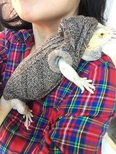 Keeping your beardie warm when out of its cage is a good idea. Clothes for your bearded dragon like this are great ideas. Cute Baby Animals, Animals And Pets, Bearded Dragon Cage, Bearded Dragon Enclosure, Bearded Dragon Terrarium, Cute Lizard, Pet Lizards, Cute Reptiles, Baby Dragon