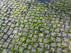Runnymede, wonderful Geoffrey Jellicoe designed progression uphill to the Kennedy memorial - now setts etched in moss
