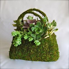 moss purse centerpiece with succulents