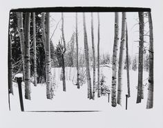 Bid now on Aspen: Trees by Andy Warhol. View a wide Variety of artworks by Andy Warhol, now available for sale on artnet Auctions. Andy Warhol Photography, Art Photography, Aspen Trees, Black And White Photography, Most Beautiful, Art Gallery, Outdoor, Diary Entry, World