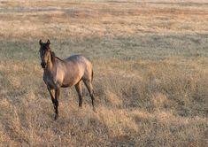 Casa no Tempo - Silent Living Color Inspiration, The Past, Horses, Landscape, Places, Animals, Colour, Houses, Animais