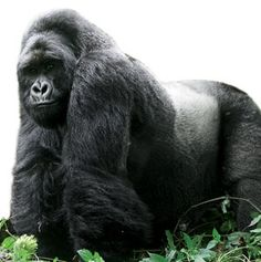 How to Plan a Mountain Gorilla–Spotting Safari | Travel + Leisure