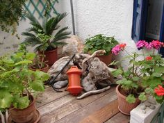 Plants and driftwood in the rear garden