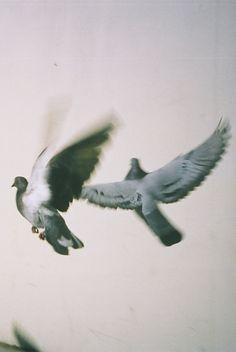 Take flight.