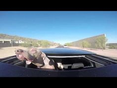 Warped Dog face in moving car is so Funny | Vidworthy.com – Funny videos, humor, fail, stunts, pranks, leaks